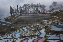 Honghe Hani tarasy Zdjęcie Royalty Free