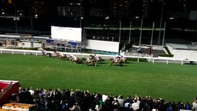 HongKong Race Course 1.mp4. Scene from Hong Kong Asia of race course horses running stock footage