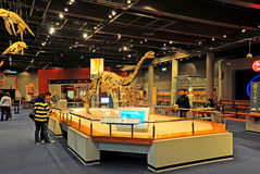Hongkong van fossielen museum Stock Afbeelding