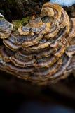 hongo Imagen de archivo libre de regalías