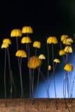 hongo Imagenes de archivo