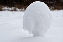 Hongo de la nieve Foto de archivo libre de regalías