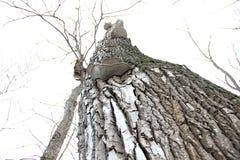 Hongo de la yesca en un árbol Fotos de archivo