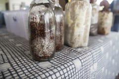 Hongo de seta en botella foto de archivo libre de regalías