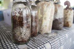Hongo de seta en botella Fotografía de archivo libre de regalías