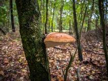 Hongo de soporte en árbol Fotografía de archivo