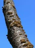 Hongo de soporte en árbol muerto fotos de archivo