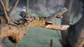 Hongo de soporte en la rama del sauce que se sacude en el viento metrajes