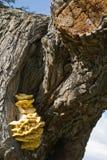Hongo del árbol Imagen de archivo libre de regalías