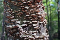 Hongo del árbol Fotos de archivo