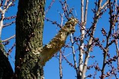 Hongo en árbol Fotos de archivo libres de regalías
