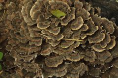 Hongo en el bosque Imagen de archivo libre de regalías