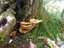 Hongo en el bosque de Dorset Imagenes de archivo