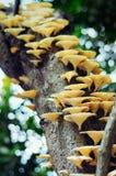 Hongo que crece en rama de árbol Fotos de archivo libres de regalías