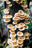 Hongo que crece en rama de árbol Imagen de archivo libre de regalías