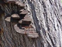 Hongo que crece en un tronco de árbol Fotos de archivo