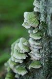 Hongo u hongos verdes en árbol Fotografía de archivo