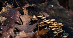 Hongo y hojas de otoño Fotos de archivo libres de regalías