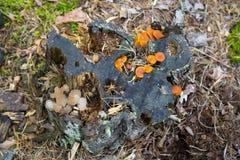 hongos foto de archivo