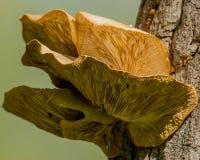 hongos Imagen de archivo libre de regalías