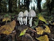 hongos Imagenes de archivo
