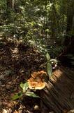 Hongos de la naturaleza Imagen de archivo libre de regalías