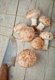 Hongos de seta Foto de archivo libre de regalías