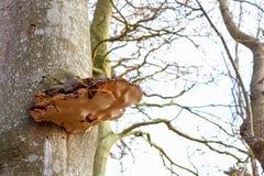 Hongos de soporte en tronco de árbol fotos de archivo