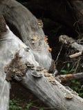 Hongos en un tronco de árbol Fotografía de archivo