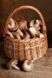 Hongos en una cesta Fotografía de archivo libre de regalías