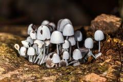 Hongos Silvestres - cogumelos - fungo fotos de stock