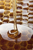Honig Stockfotografie