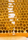 Honig Stockfoto