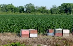 Honig Lizenzfreies Stockfoto