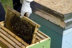 Honig-Biene auf Bienenwabe Lizenzfreies Stockbild