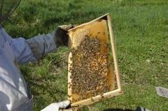 Honig-Biene auf Bienenwabe Lizenzfreie Stockfotos