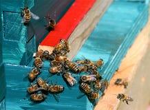 Honig-Bienen Lizenzfreie Stockbilder