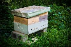 Honig-Bienen-Bienenhaus Stockfoto