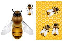 Honig-Bienen- und Bienenwabehintergrund lizenzfreie abbildung