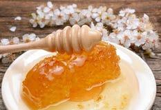 Honig-, Bienenwaben- und Aprikosenblumen Lizenzfreie Stockbilder