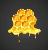 Honig in den Bienenwaben Stockbild