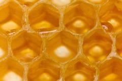 Honig in der Bienenwabe lizenzfreies stockbild