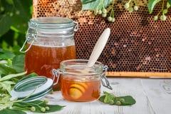 Honig in einem Glas und in einer Bienenwabe mit Lindenbaum Lizenzfreie Stockfotografie