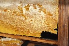 Honig im Kamm Lizenzfreies Stockbild