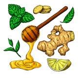 Honig, Ingwer, Zitrone und Minze vector Zeichnung Hölzerner Löffel Lizenzfreie Stockbilder