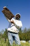 Honig-Landwirt Stockbild