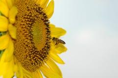 Honig-Zeit Lizenzfreie Stockfotos