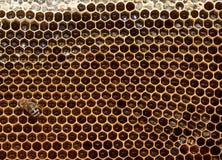 Honigbiene auf Bienenwabe Lizenzfreie Stockfotos