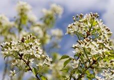 Biene auf einem Sherry. Stockbilder
