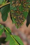 Honigbienen Stockfoto